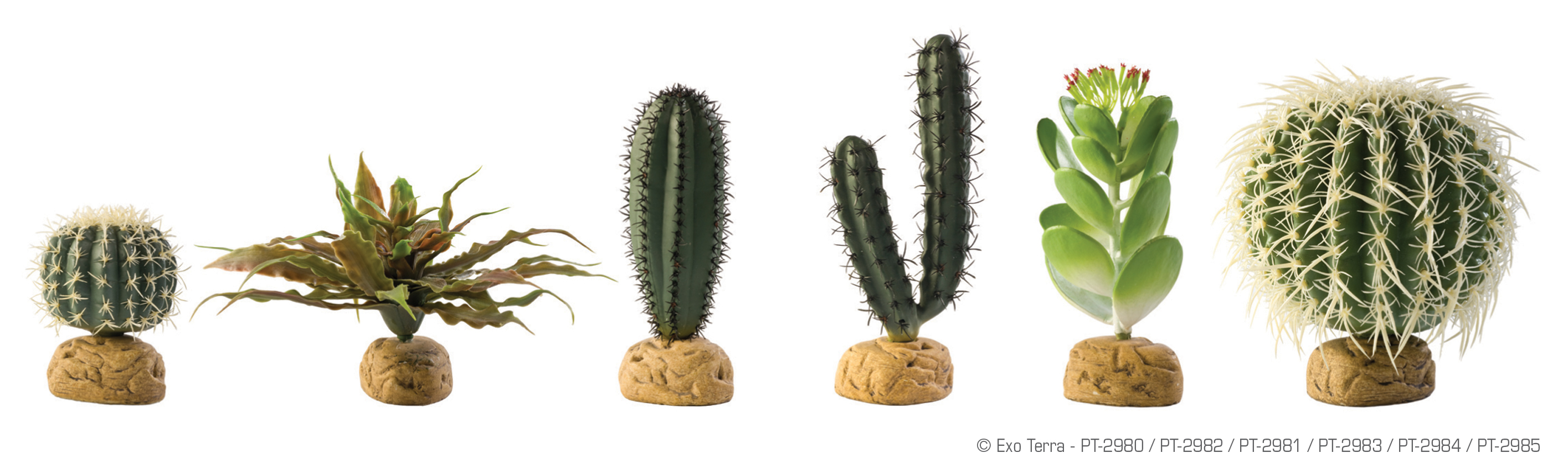 Ground_Desert_Plants_Family.jpg